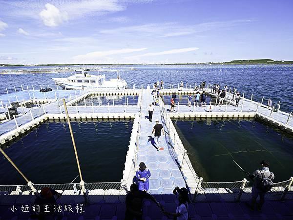 澎湖海洋牧場,鮮蚵吃到飽-37.jpg