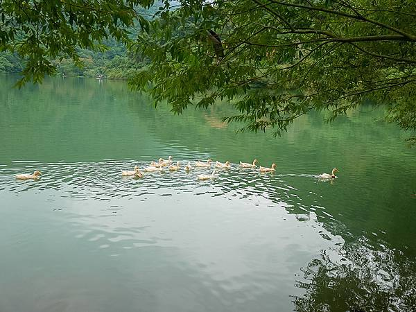 梅花湖-18.jpg