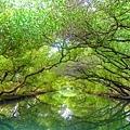 台南四草綠色隧道-20.jpg