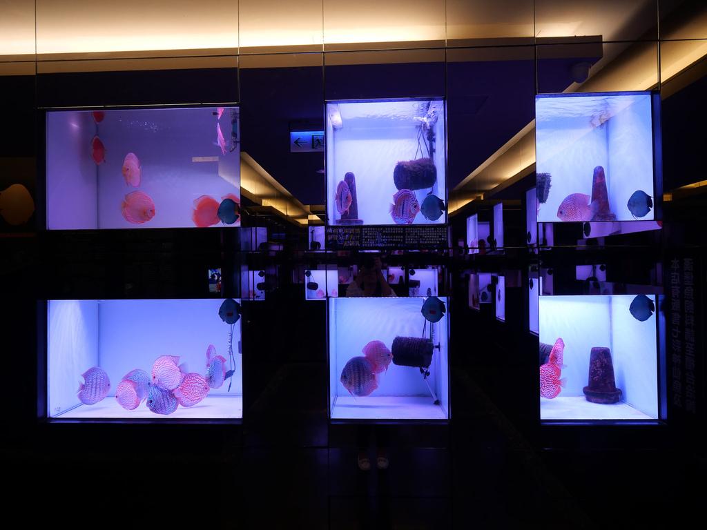 神仙魚餐廳-09.jpg
