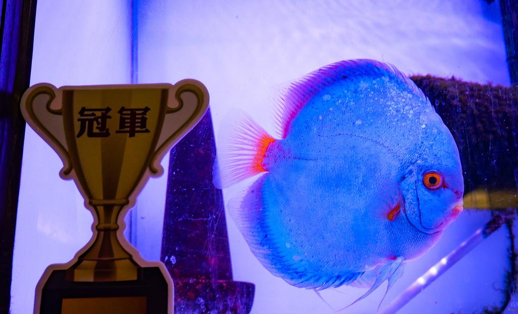 神仙魚餐廳-15.jpg