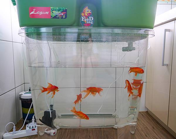 魚菜共生-13.jpg