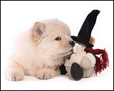 sChow_Chow_dog_wallpaper_850760
