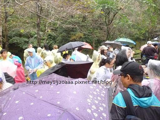 2012東北角草嶺古道芒花季_14
