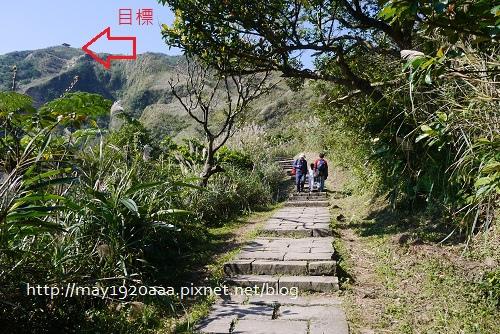 2013東北角草嶺古道芒花季_P1030027.JPG