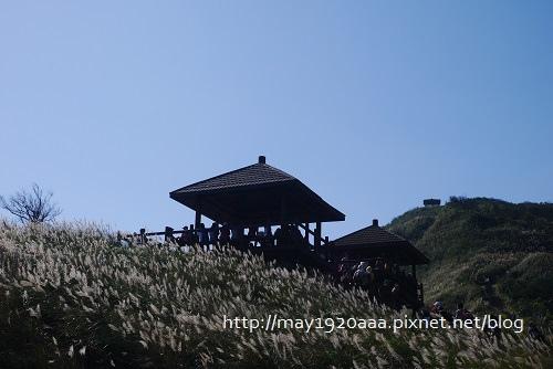 2013東北角草嶺古道芒花季_P1030032.JPG