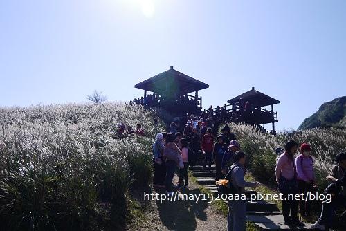 2013東北角草嶺古道芒花季_P1030038.JPG