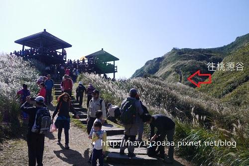 2013東北角草嶺古道芒花季_P1030040.JPG