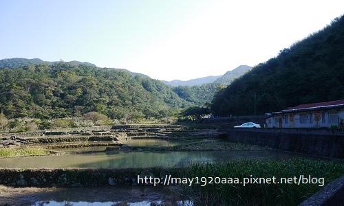 2013東北角草嶺古道芒花季_P1030085.JPG