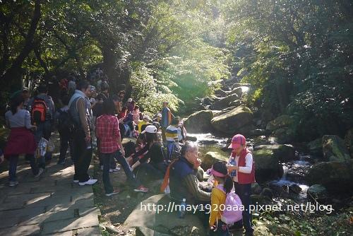 2013東北角草嶺古道芒花季_P1030066.JPG