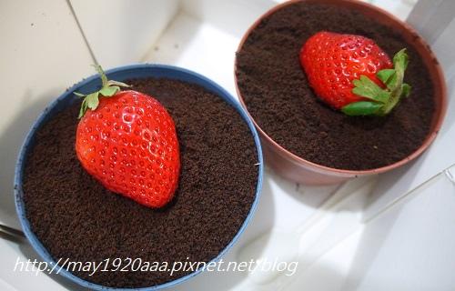 義珍香-盆栽蛋糕_P1030629.JPG