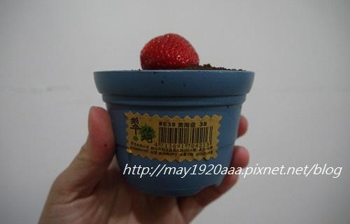 義珍香-盆栽蛋糕_P1030630.JPG