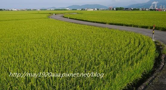 2014-06-02_冬山-三奇_P1040525.JPG