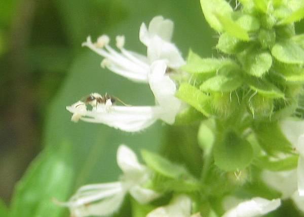 IMG_5024--1 螞蟻