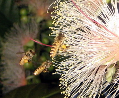 蜜蜂3.4.