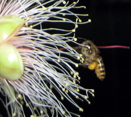 蜜蜂5.6.