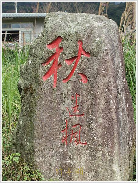 竹子湖海竽-2