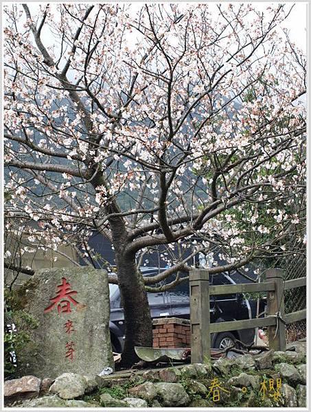 春櫻-7jpg