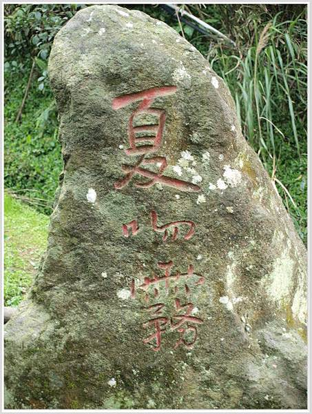 竹子湖海竽-4