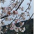 春櫻-10.jpg