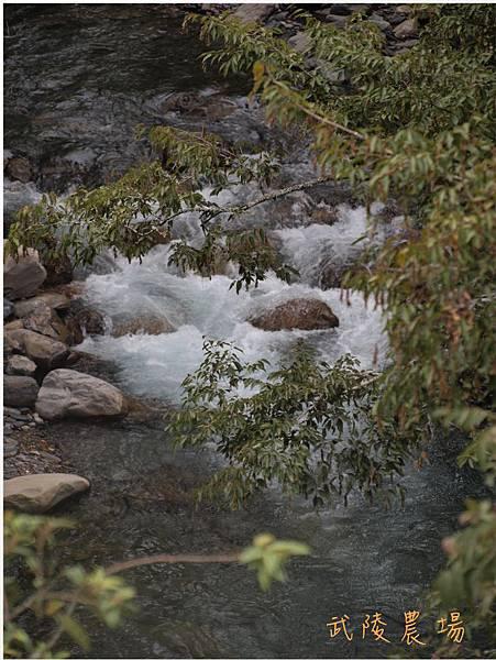 武陵七家灣溪