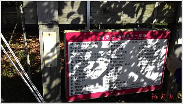 福壽山蘋果樹王