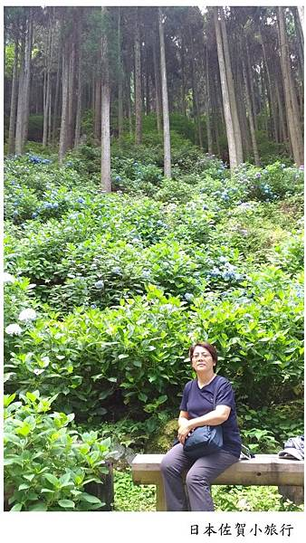 日本佐賀見返瀑布-08.jpg