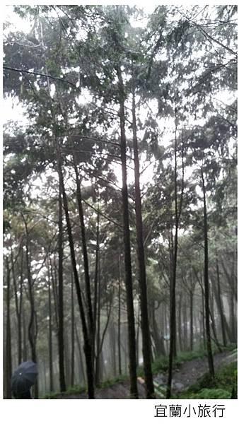宜蘭棲蘭馬告森林-31.jpg