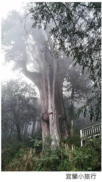 宜蘭棲蘭馬告森林-33.jpg