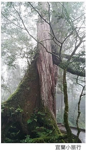 宜蘭棲蘭馬告森林-34.jpg
