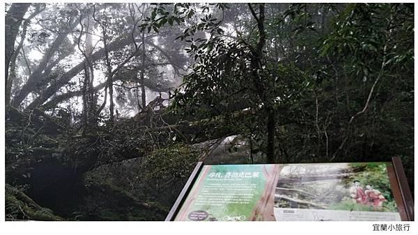 宜蘭棲蘭馬告森林-35.jpg