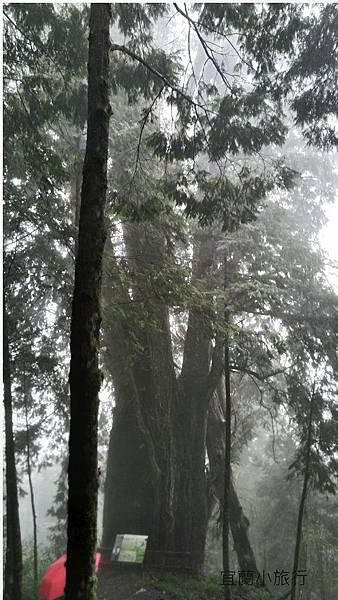 宜蘭棲蘭馬告森林-37.jpg