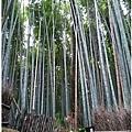 日本-嵐山-5.jpg