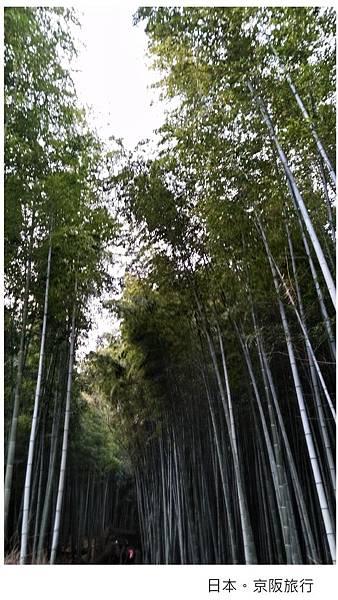 日本-嵐山-2.jpg