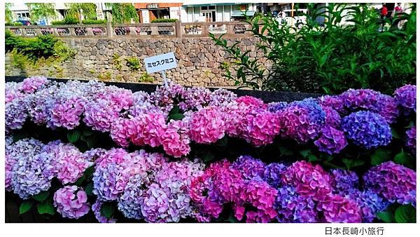 日本長崎紫陽花.jpg