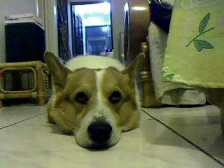 Video call snapshot 202.png