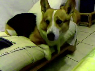 Video call snapshot 50.png