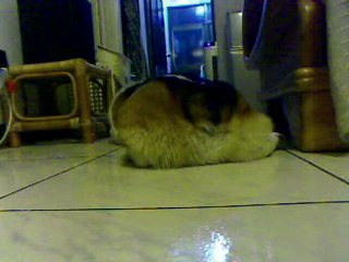 Video call snapshot 194.png