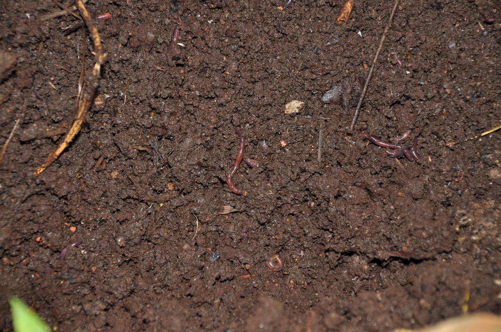土壤條件.jpg