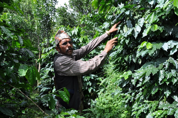 咖啡農02.jpg