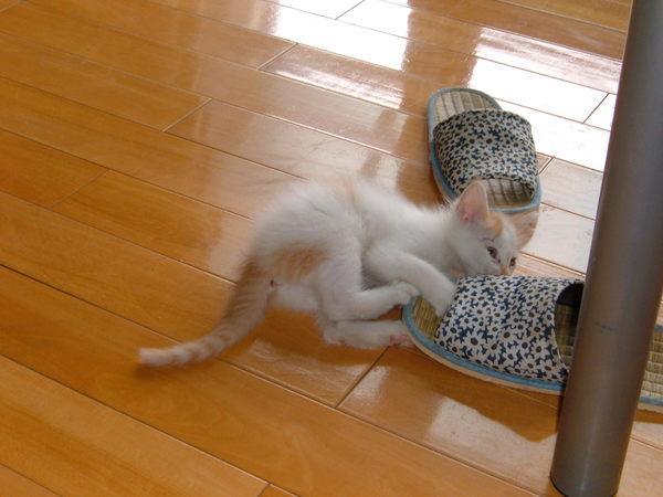 貓咪與拖鞋