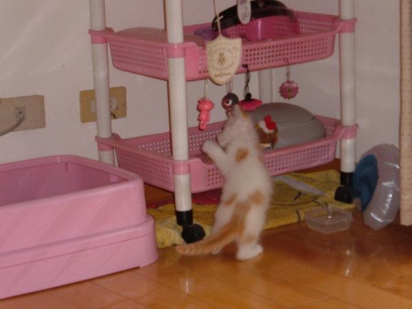 他真的有玩我給他的玩具喔!