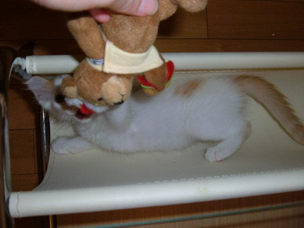 貓咪與熊熊的遊戲