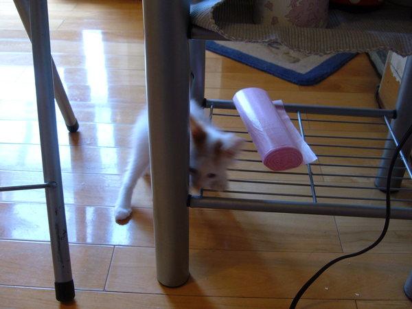 正宗躲貓貓