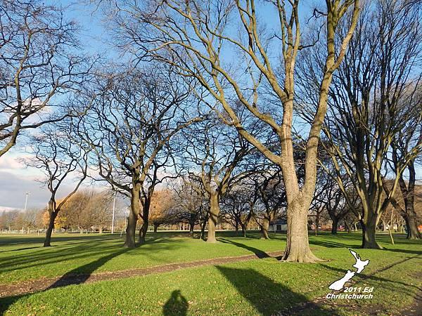 美麗的Hagley Park