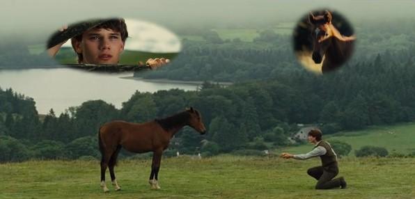 War Horse1