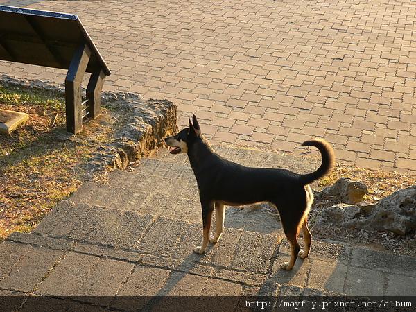 半路陪我們爬山的狗狗