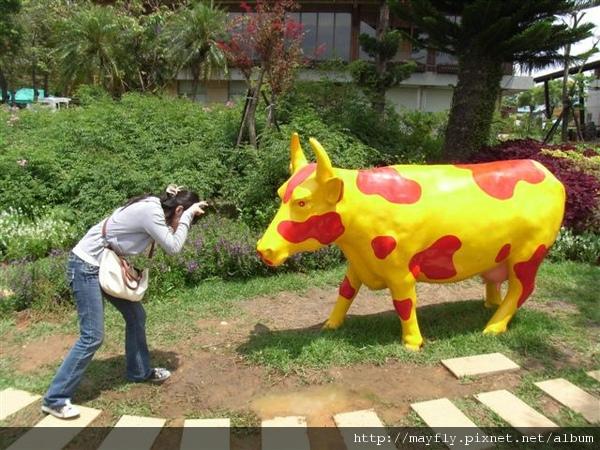 那隻牛看起來有點不屑= =
