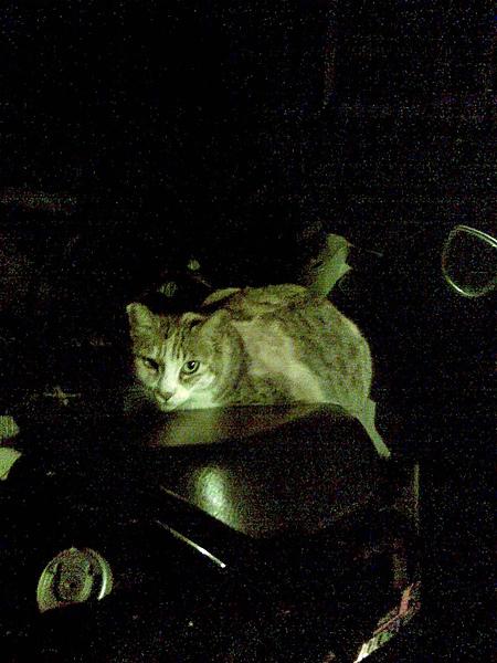貓咪霸占了車座墊
