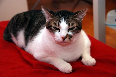 cat_3_20100116_3.jpg